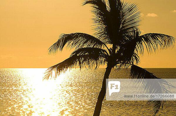 USA  Florida  Boca Raton  Silhouette einer Palme gegen das Meer bei Sonnenaufgang