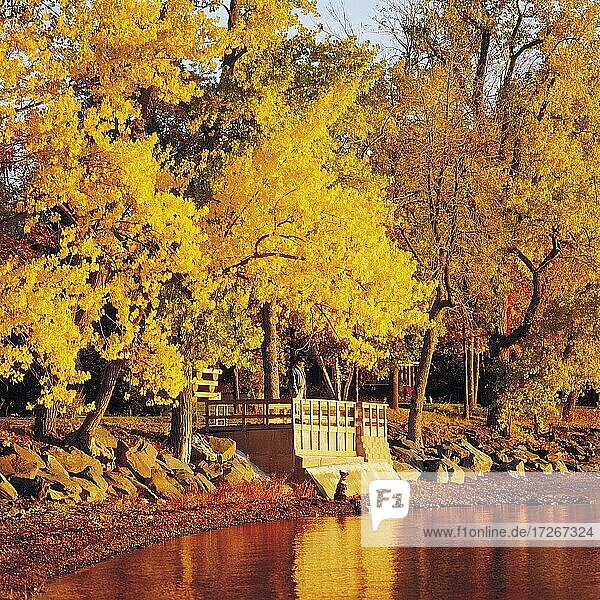 Enjoying a sunrise  with dog  East Shore Road Grand Isle  Lake Champlain Islands  Lake Champlain  Vermont  USA  North America