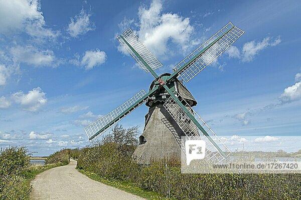 Windmill Charlotte  Goldhöft  nature reserve Geltinger Birk  Geltinger Bight  Schleswig-Holstein  Germany  Europe