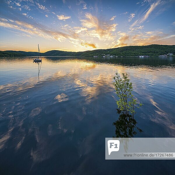 Sunset at the Edersee  small tree in the water and sailboat  Ederstausee  Edertalsperre  behind Schloss Waldeck  Hesse  Germany  Europe