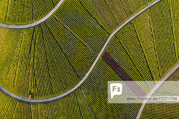 Aerial view of vast countryside vineyards in autumn Aerial view of vast countryside vineyards in autumn