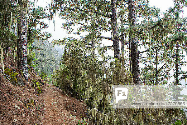 Narrow mountain trail in forest at Barranco Madre del Agua  Tenerife  Spain