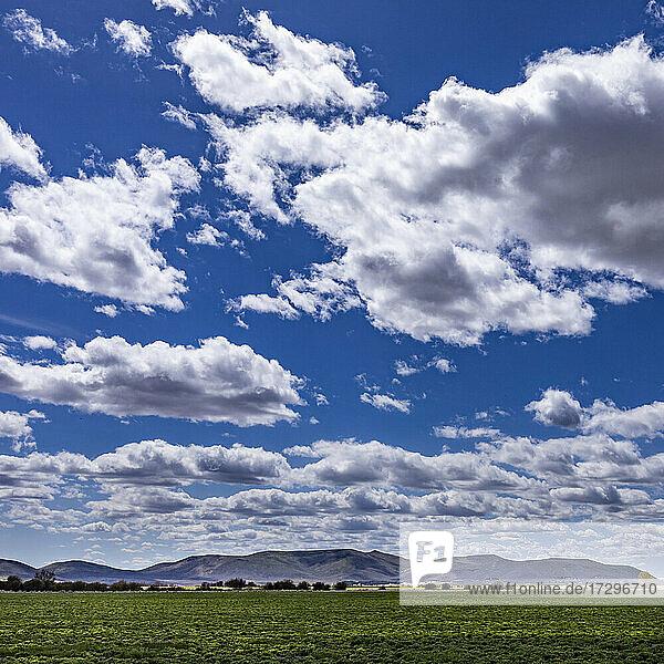 USA  Idaho  Bellevue  Flauschige Wolken am Himmel über einem Feld bei Sun Valley