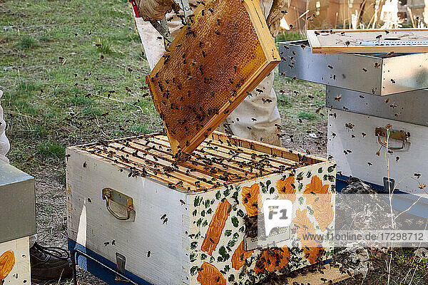Apiarist working with your bees to achieve sweet honey