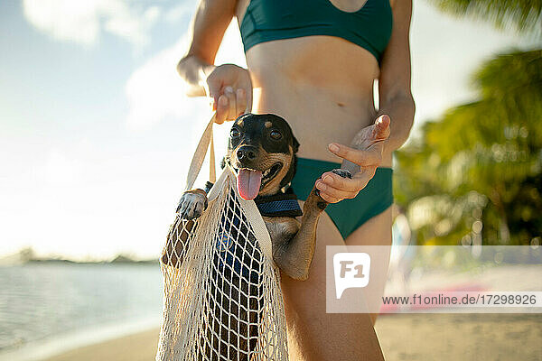 Woman holding dog in reusable bag at the beach