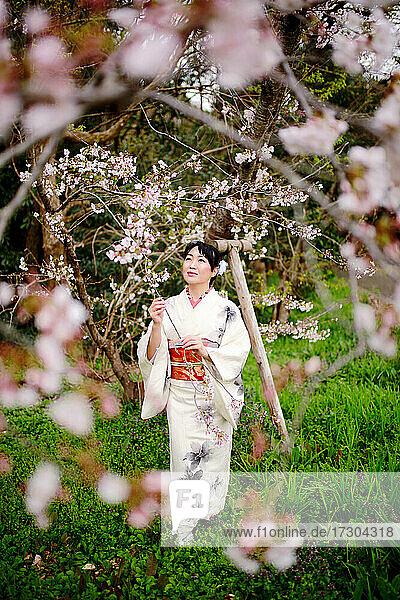 Kimono woman and cherry blossoms