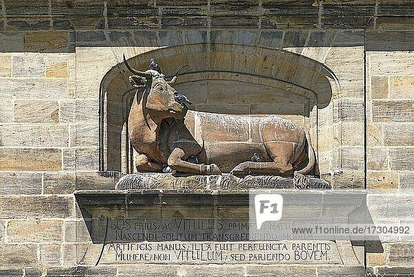 Ochsenskulptur am historischen Schlachthaus von 1742-1903 und Fleischbank  bis 1950 Fleischverkaufshalle  heute Teil der Bibliothek der Universität  Bamberg  Oberfranken  Bayern  Deutschland  Europa