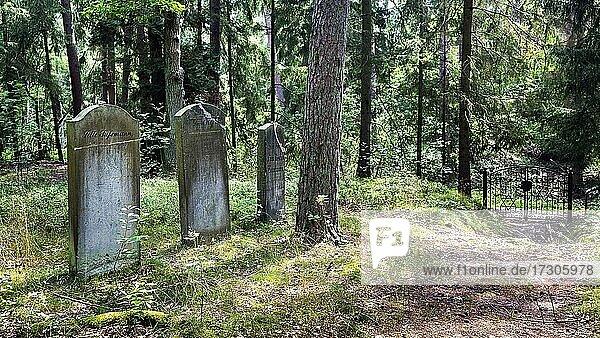 Jüdischer Friedhof Bleckede  Grabsteine und Pforte mit Davidsternen  Bleckede  Lüneburg  Elbtalaue  Niedersachsen  Deutschland  Europa