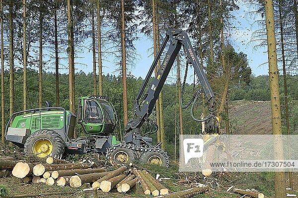Harvester erntet mit Fichtenborkenkäfer (Cryphalus abietis) befallene Fichten  Siegerland  Nordrhein-Westfalen  Deutschland  Europa