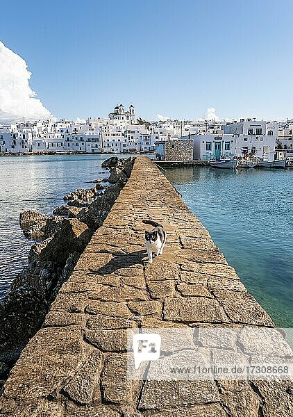 White and black cat on harbour wall  harbour town Naoussa  island Paros  Cyclades  Greece  Europe