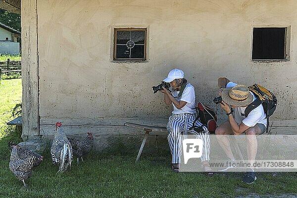 Fotografen fotografieren Hühner  Bad Windsheim  Bayern  Deutschland  Europa