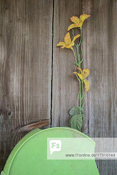 Gelbe Blume auf hölzernem Hintergrund