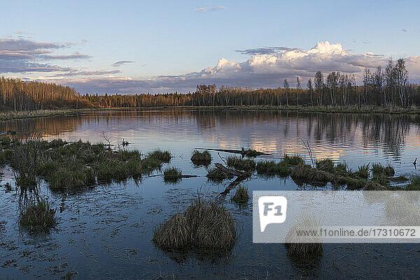Sunset at a boreal lake in Elk Island National Park  Alberta  Canada  North America