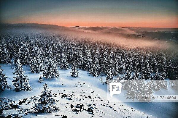 Sonnenuntergang mit Fichten Wald im Nebel und Schnee im Winter,  Wolfswarte,  Bruchberg,  Goslar,  Nationalpark Harz,  Niedersachsen,  Deutschland,  Europa