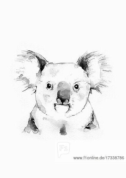 Aquarell eines Koala-Bären