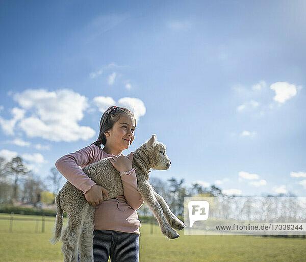 UK  North Yorkshire  Girl (6-7) holding lamb in organic farm