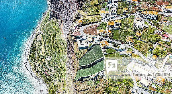 Terraced green fields by the turquoise ocean from above  Camara de Lobos  Madeira island  Portugal  Atlantic  Europe
