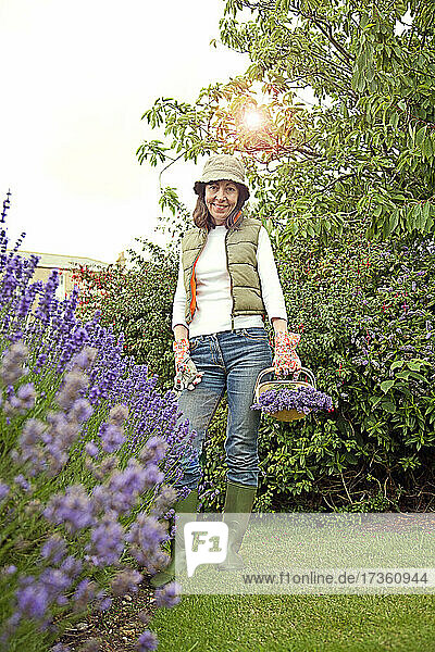Smiling woman holding basket with lavender flowers at garden
