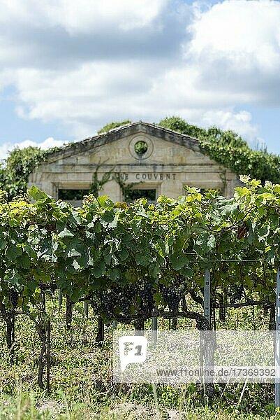 Vineyard  Vines  Saint Emilion  Gironde  Nouvelle-Aquitaine  France  Europe Vineyard, Vines, Saint Emilion, Gironde, Nouvelle-Aquitaine, France, Europe