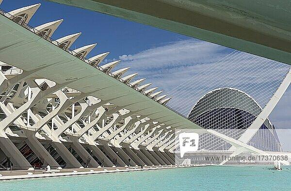 Museu de les Ciències  Prince Philip Science Museum  City of Arts and Sciences  Valencia  Spain  Europe