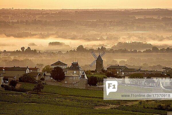 Moulin a Vent Beaujolais vineyard  Romaneche Thorins  Saone et Loire department  Beaujolais  Auvergne-Rhone-Alpes  France  Europe