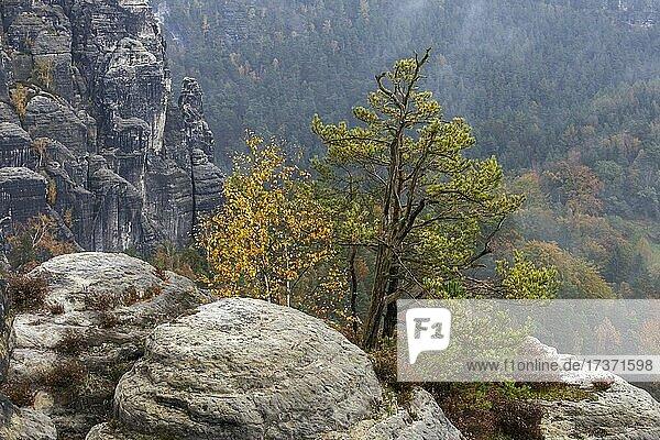 Sandsteinfelsen im Basteigebiet,  Elbsandsteingebirge,  Nationalpark Sächsische Schweiz,  Deutschland,  Europa