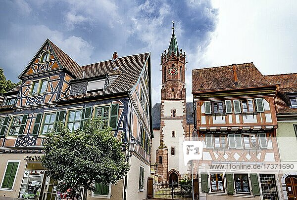 Market square with half-timbered houses  tower of the Catholic Church of junglefowl (Gallus)  Baden-Württemberg  Germany  Europe