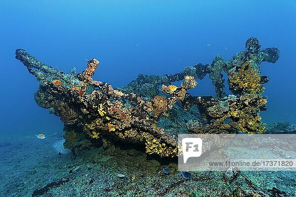 Wreckage thickly encrusted with various sponges  tugboat  wreck  shipwreck  Virgen de Altagracia  Caribbean Sea near Playa St. Lucia  Camagüey Province  Caribbean  Cuba  Central America