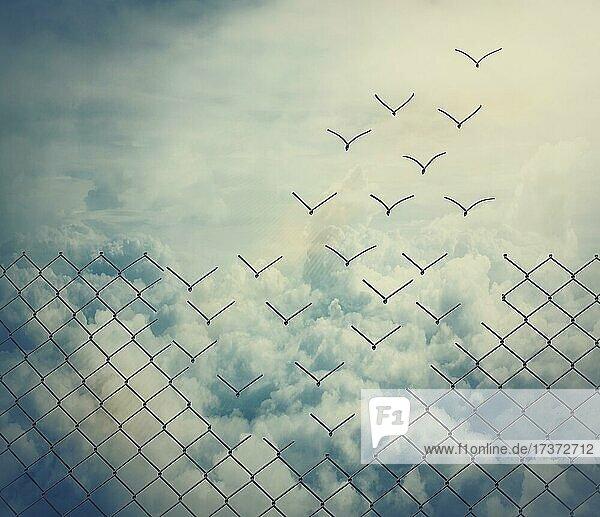 Surreale und magische Flucht als Metalldrahtgeflecht  das sich in fliegende Vögel über den Wolken verwandelt. Überwindung von Hindernissen zusammen  Teamarbeit Konzept. Freiheit und Erfolg minimalistische inspirierende Kunst Surreale und magische Flucht als Metalldrahtgeflecht, das sich in fliegende Vögel über den Wolken verwandelt. Überwindung von Hindernissen zusammen, Teamarbeit Konzept. Freiheit und Erfolg minimalistische inspirierende Kunst