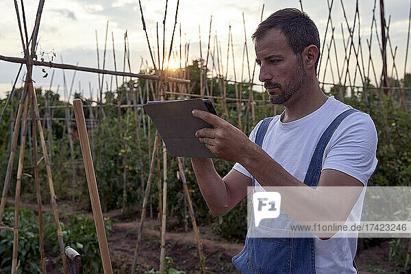 Farmer using digital tablet while standing at agricultural field during sunset