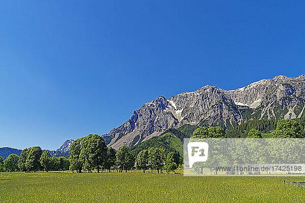 Landschaft  Wildblumenwiese  Dachsteinmassiv