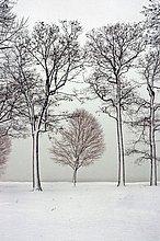 Winterszene mit nassen Schnee stecken auf Bäume an Port Huron, Michigan