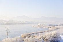 Gefroren Schilf am Seeufer, am Neumarkt Wallersee, Salzburg-Umgebung, Salzburg, Österreich