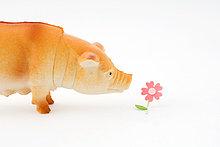 Plastikschwein riechende Blume