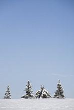 Verschneite Bäume, Wallgau, Bayern, Deutschland
