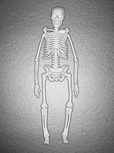 Kunststoff-Skelett