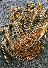Ohren Weizen mit Schaufel