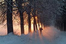 Allee bei Sonnenuntergang, Strass im Zillertal, Tirol, Österreich, Europa