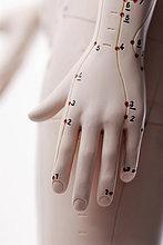 Anatomisches Modell, Hand mit Akupunkturpunkten