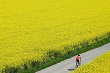 Mann mit dem Fahrrad durch Felder