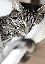 Katze liegt auf dem Sofa