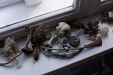 Verschiedene getrocknete Pflanzen und Artefakte auf dem Fensterbrett