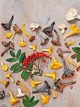 Eberesche,Sorbus aucuparia,Stilleben,still,stills,Stillleben,Lifestyle
