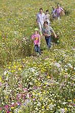 zwischen,inmitten,mitten,lächeln,gehen,halten,Wildblume,Wiese,Sonnenlicht,Mehrgenerationen Familie