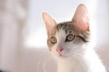 Porträt von Kätzchen
