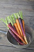 Frische Karotten im Sieb auf Holzdiele