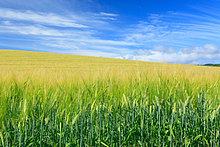 Wolke ,Himmel ,Feld ,Gerste ,Hokkaido