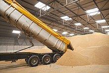 Getreide ,Lagerhalle, Lager ,Lastkraftwagen ,abladen ,Weizen