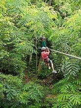 rutschen,Junge - Person,Regenwald,Heiligtum,jung,Linie