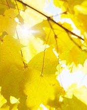 beleuchtet,Close-up,Laub,Sonne